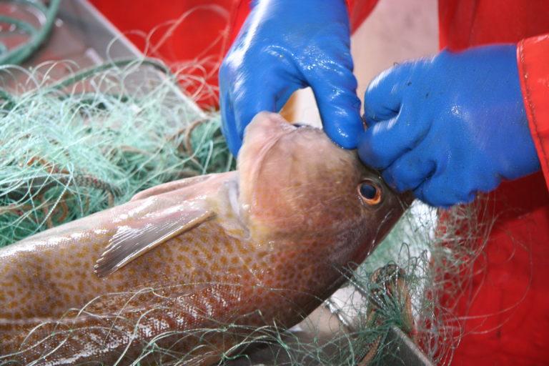 DAnmarks Fiskeriforening PO