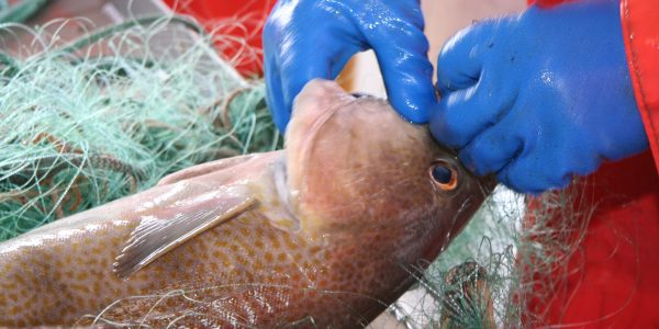 Arkivfoto: Danmarks Fiskeriforening PO