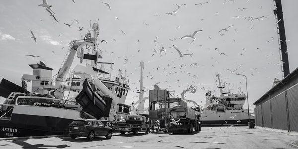 Arkivfoto: Skagen Havn.