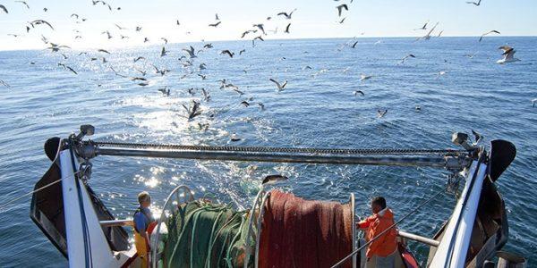 Fisketrawler. Foto: DTU Aqua
