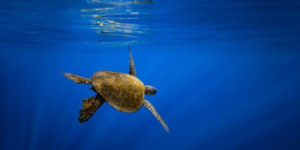 Foto: Marine Stewardship Counsil