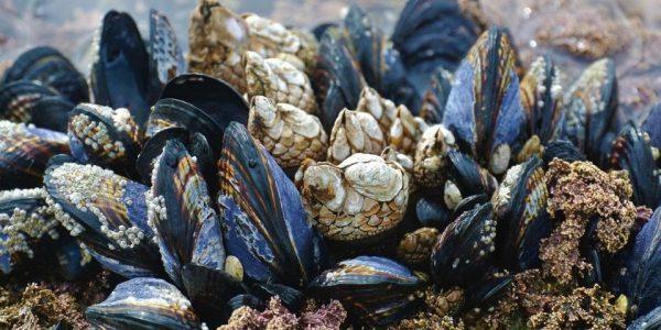 I Grønsund Havhave kan man fremover høste sine egne muslinger. Foto: Grønsund Havhave