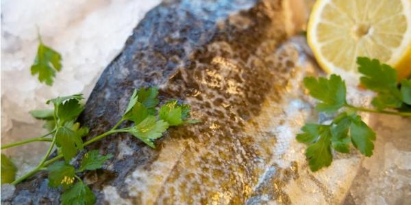 Foto: Danmarks Fiskeriforening
